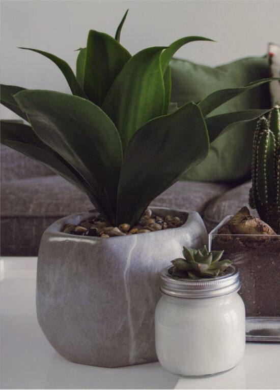 Drobne kwiaty doniczkowe  na stoliku w gabinecie psychoterapeutycznym
