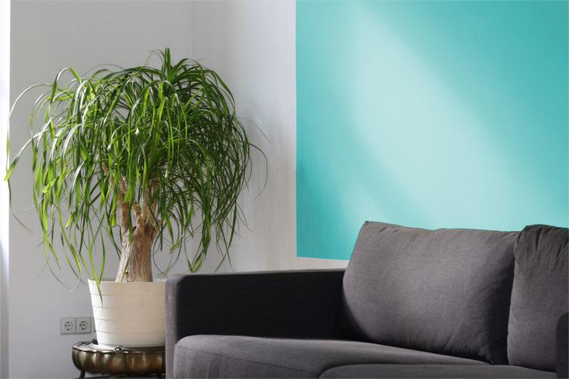 Sofa i kwiat doniczkowy w poczekalni terapeuty
